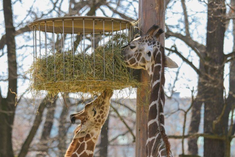 Время работы зоопарка