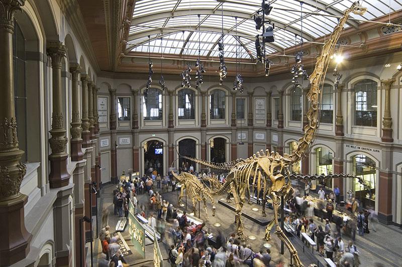 Музей динозавров в Берлине